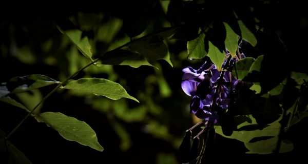Natur_41