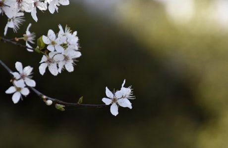 Foråret er i fuld gang